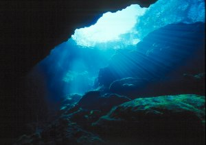 Peacock Springs Underwater Photo