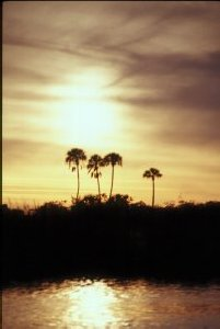 Sunset Photograph with Palms